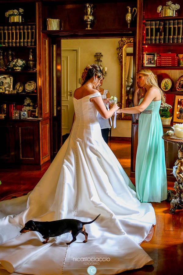 cane sul vestito da sposa, bassotto