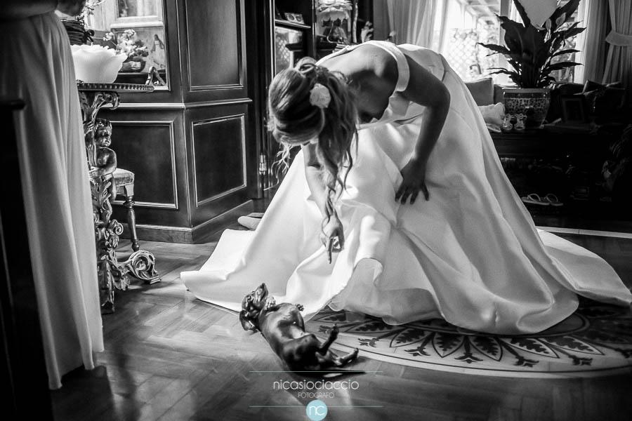 bassotto e sposa