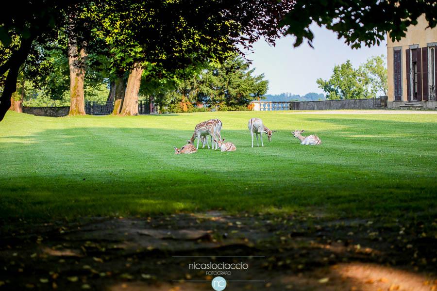 Foto di Matrimonio a villa Orsini colonna, cerbiatti nel parco